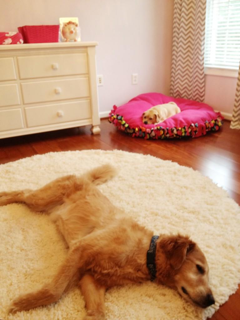 Hot Pink and Gray Elegant Girl Nursery Dog Resting