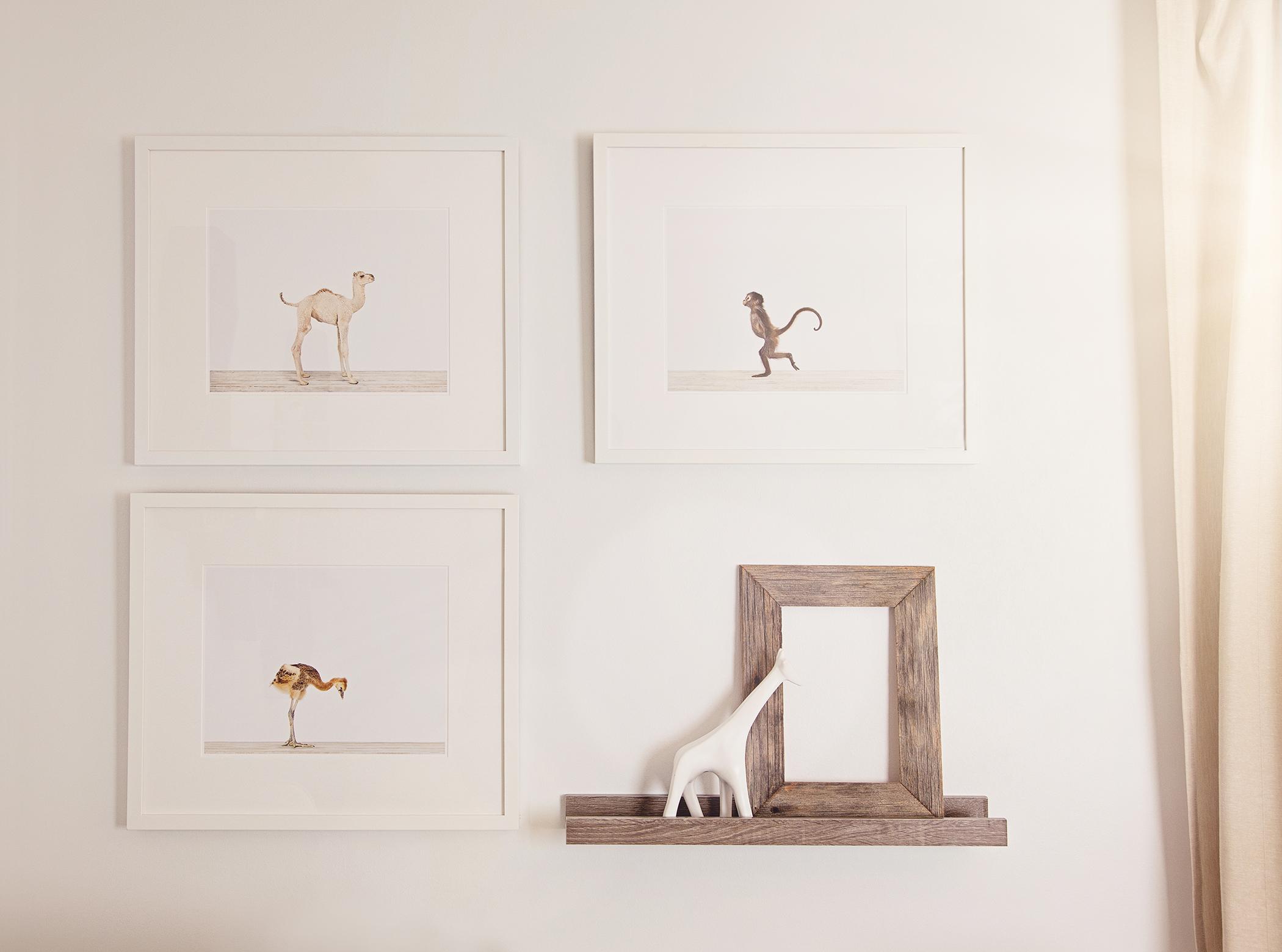 Sharon Montrose Animal Prints