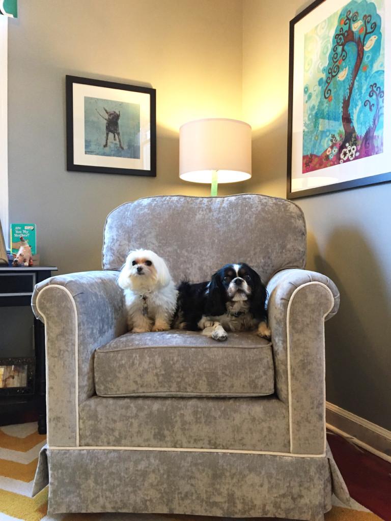 Twins Nursery Boy And Girl Dog Theme In New York