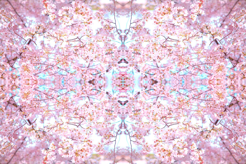 Cherry Blossoms No.249 by Dagmara Weinberg