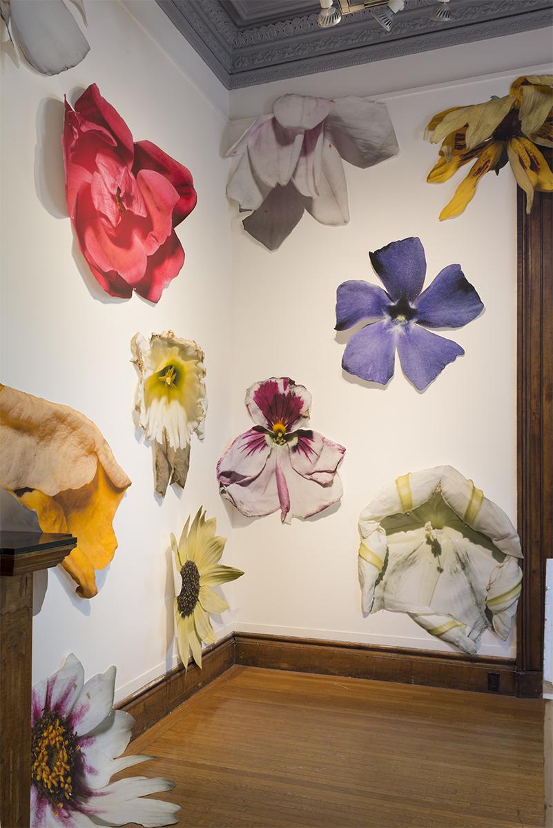 Flowers by Benjamin Langford