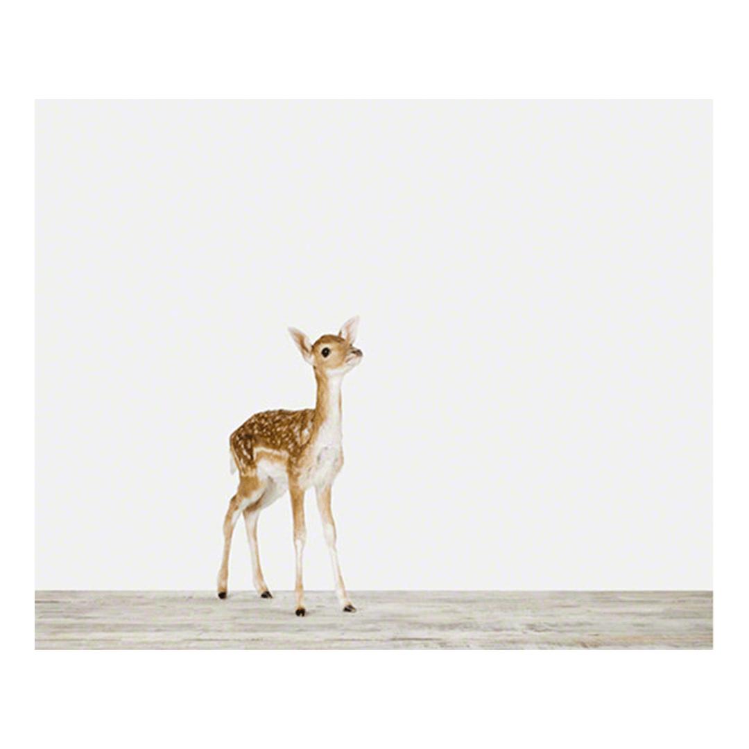 Baby Deer Print