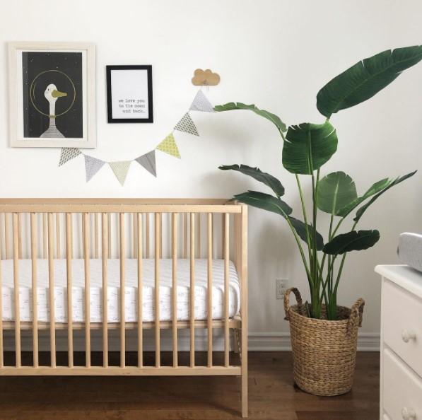 Nursery with crib and bird of paradise plant
